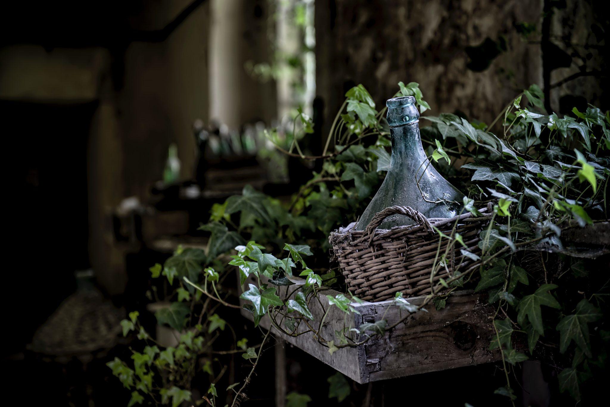 Garden Ivy Decor