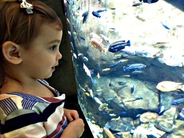Annabelle Aquarium 2