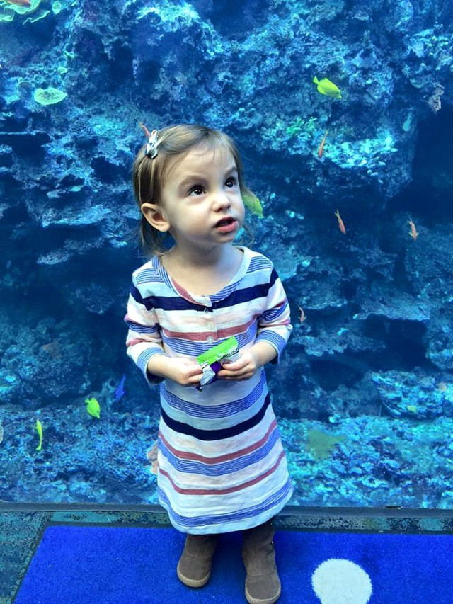 Annabelle Aquarium
