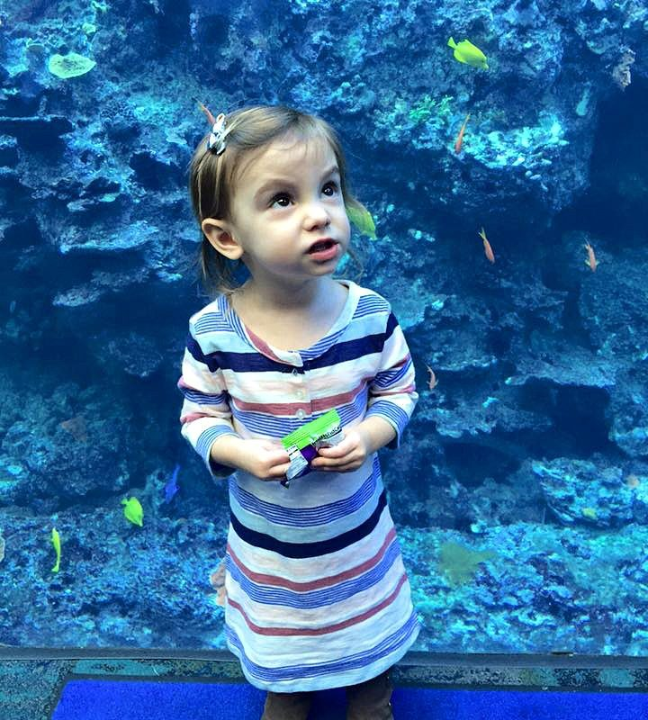 Tips for a Day at the Aquarium
