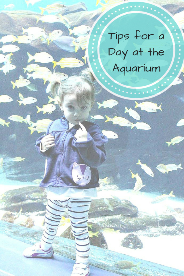 Tips for Toddlers at the Aquarium