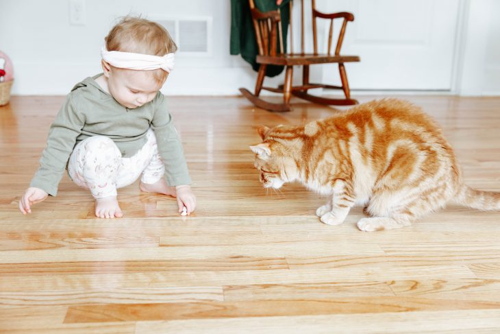 Baby feeding cat treats