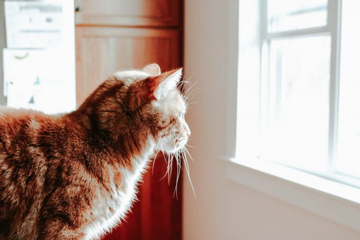 Cat Bird Watching Purina Save a Fortune