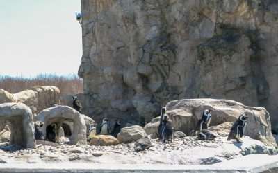 CT Travel // Visiting Mystic Aquarium with Kids