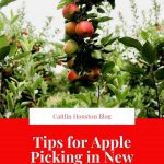 Tips for Apple Picking in New England