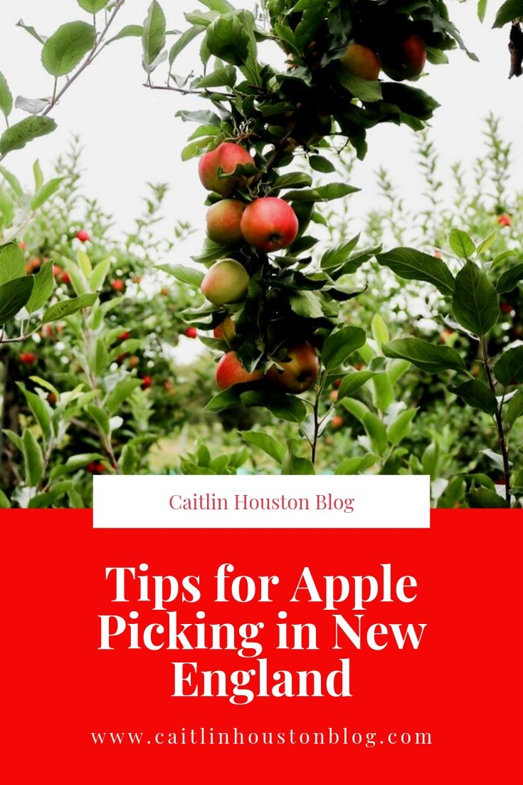 Tips for Apple Picking in New England by Caitlin Houston