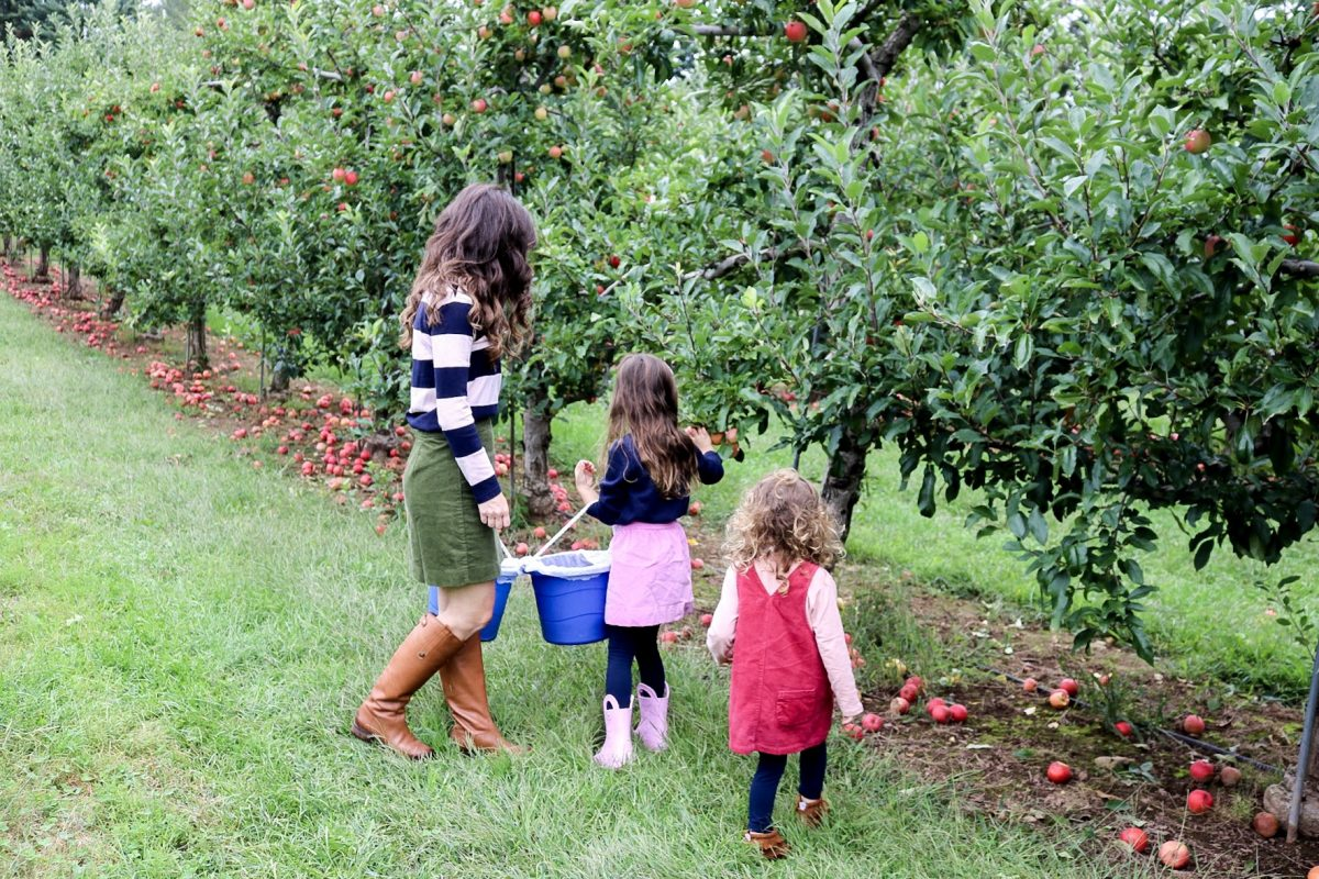 Woman with daughters picking apples at Drazen Orchard Cheshire CT